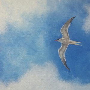SurfArt painting Tern