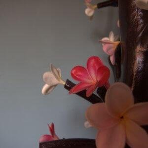 Surfart Plumeria Flowers - Tree of love