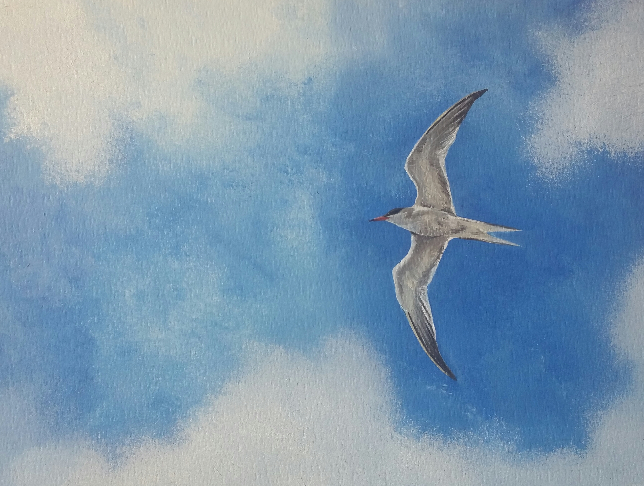 SurfArt original paiting Tern